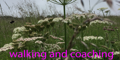 image of a meadow, text says walking and coaching